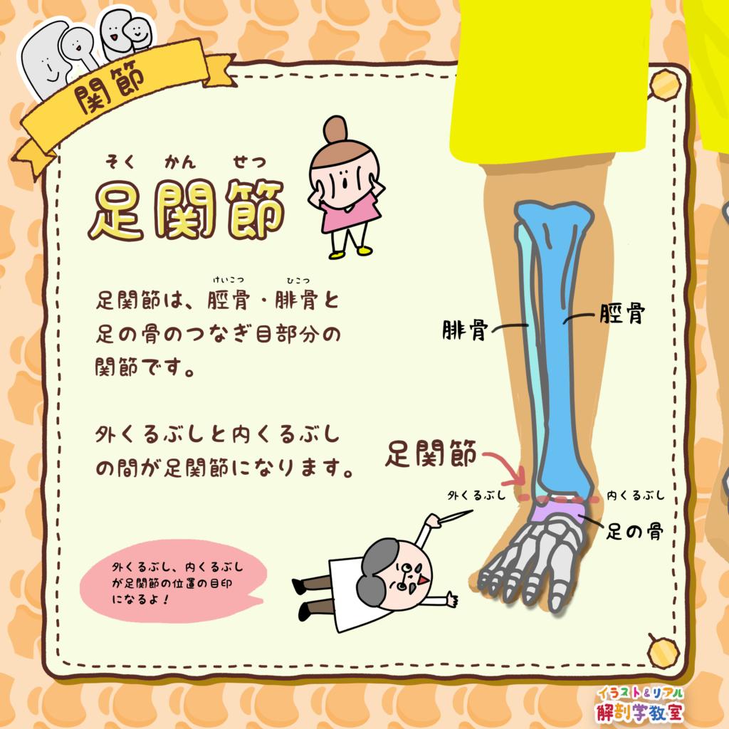 腓骨(ひこつ)と脛骨(けいこつ)