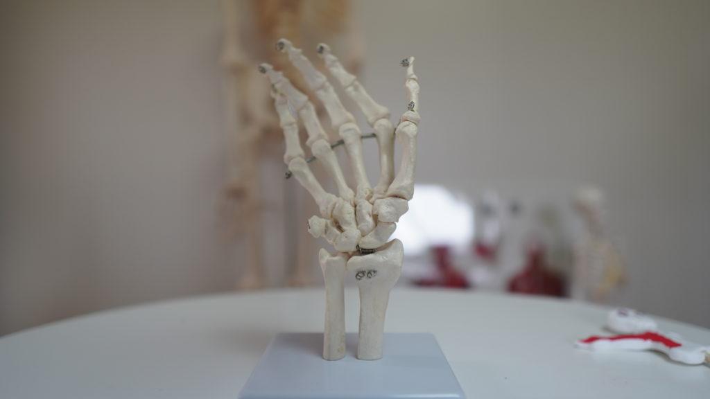手の骨、手指骨、手根骨