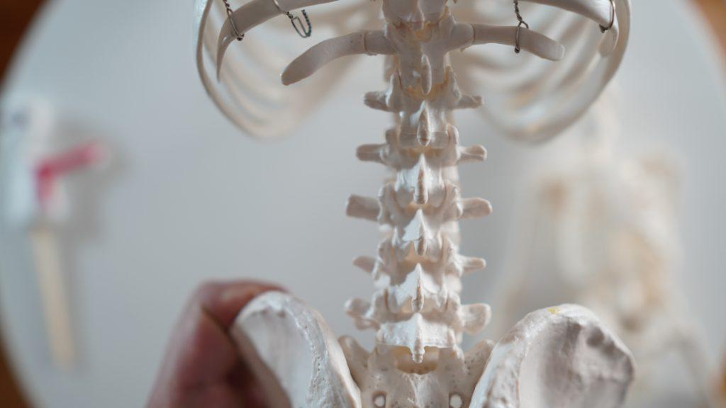 背骨(せぼね)、腰椎(ようつい)