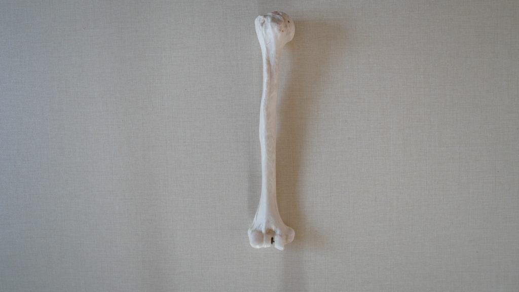 上腕骨(じょうわんこつ)
