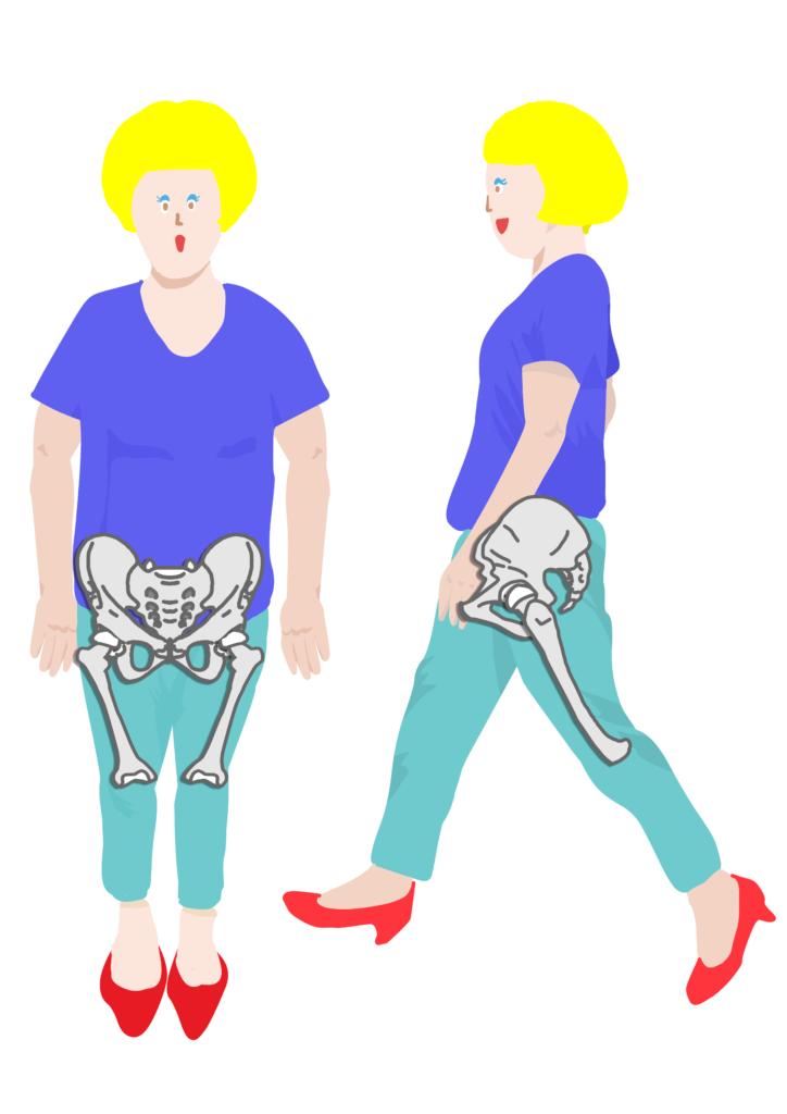 骨盤と大腿骨