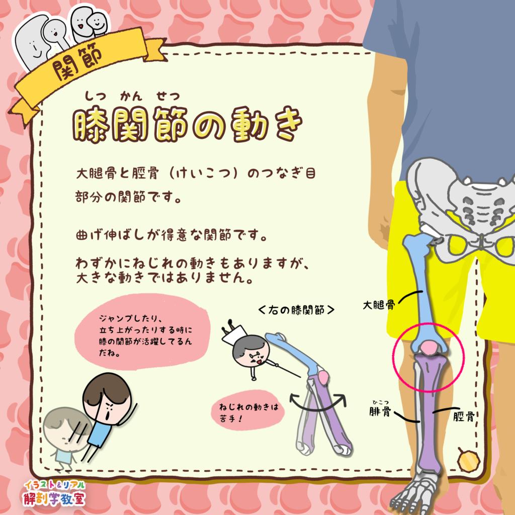 膝関節 ひざかんせつ の動き