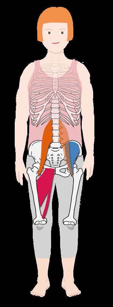 大腰筋 腸骨筋 股関節内転筋群