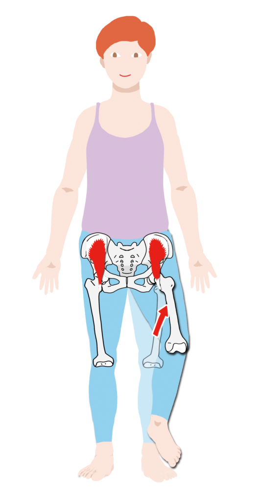 腸骨筋 作用