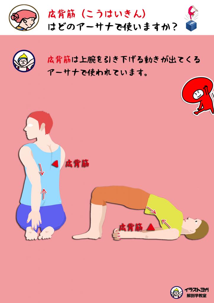 広背筋 ヨガ解剖学