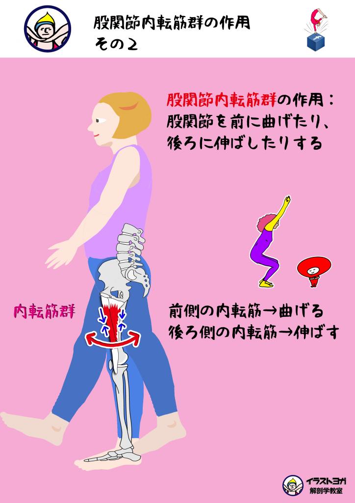 内転筋|ヨガ解剖学