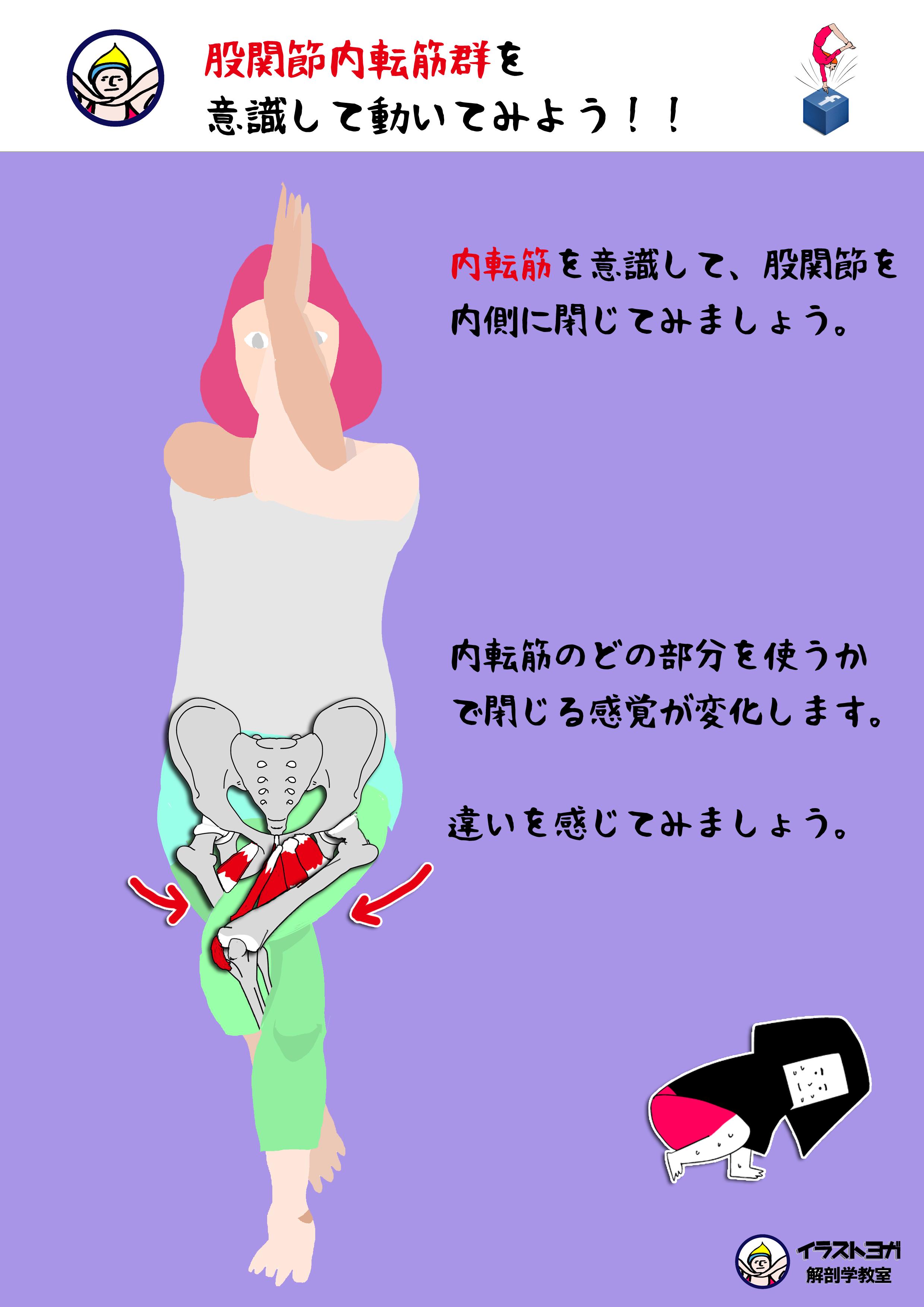 股関節内転筋群(ないてんきんぐん)まとめ|イラスト解剖学 | 世界一ゆる〜い解剖学教室