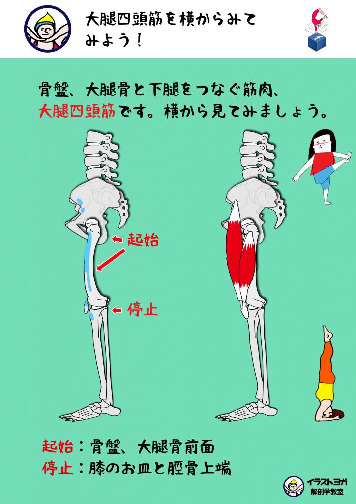 ワークショップ 解剖学