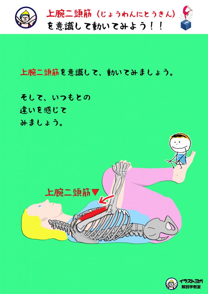 解剖学ワークショップ