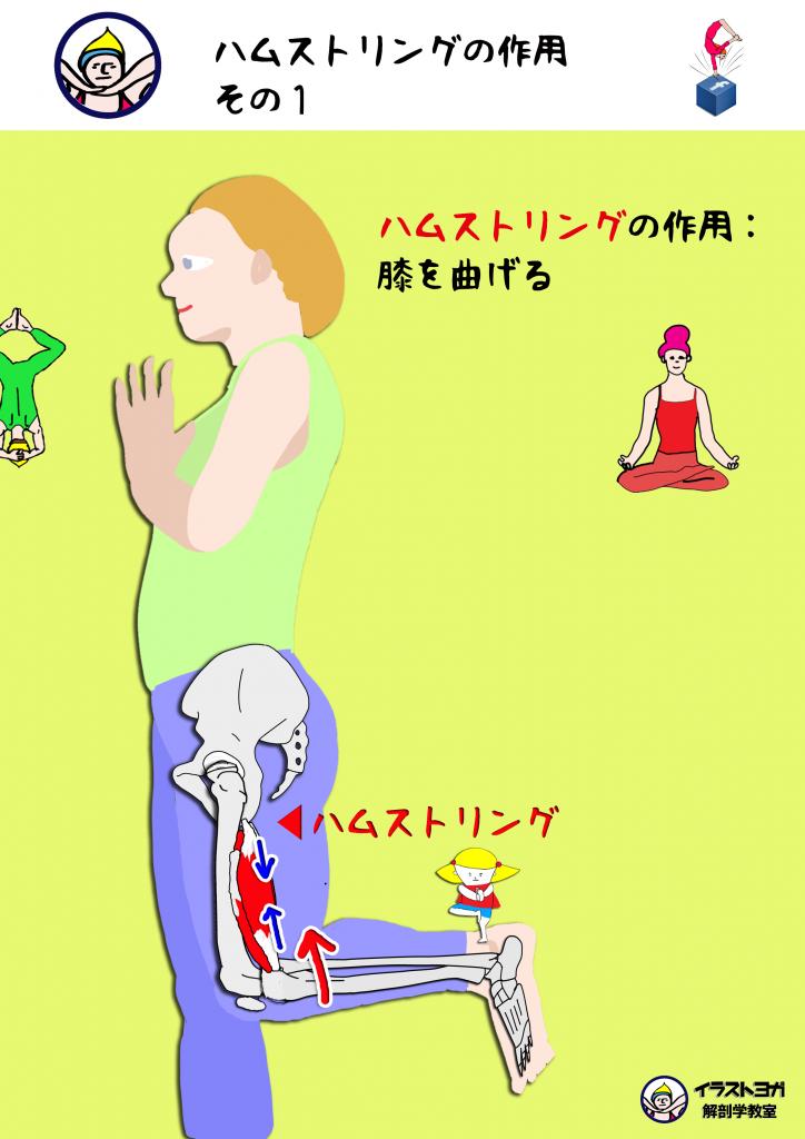 ハムストリング ヨガ解剖学
