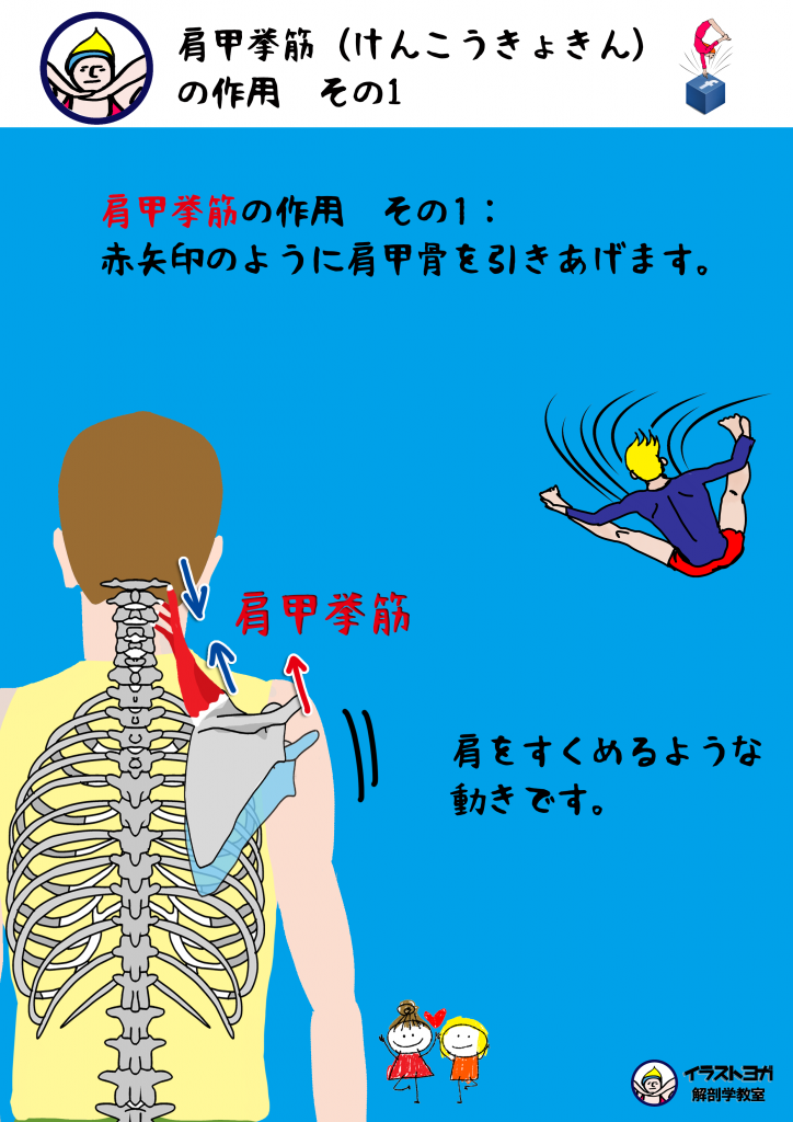 解剖学 イラスト